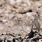 Gecko, Death Valley by JustLikeKat