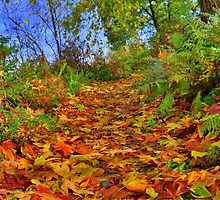Devon: Pathway to Autumn by Rob Parsons
