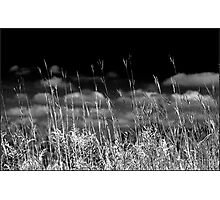 Prairies of the Midwestern US Photographic Print