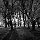 Night Moods 3 by Alycia Rowe