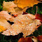 Autumn Raindrops by Lynnette Peizer