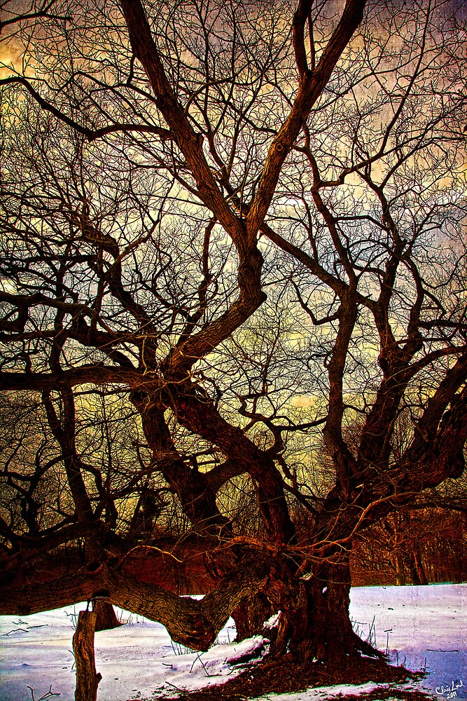 An Ancient Tree In Winter by Chris Lord