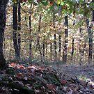 Kaona Wood - Six days later - 8 by branko stanic