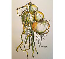 Drying onions. Tuscany. Photographic Print