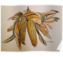 Drying sweetcorn, Tuscany. Pen and wash. Framed. 42x32cm Poster