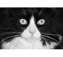 Jasper the Tuxedo Cat Photographic Print
