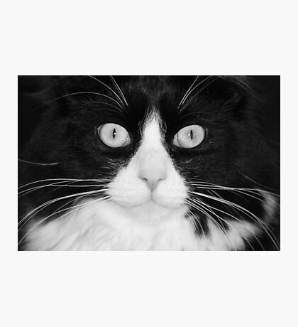 Jasper the Tuxedo Cat Photographic Print