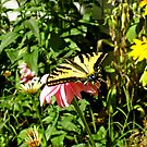 Butterfly World by Randall Robinson