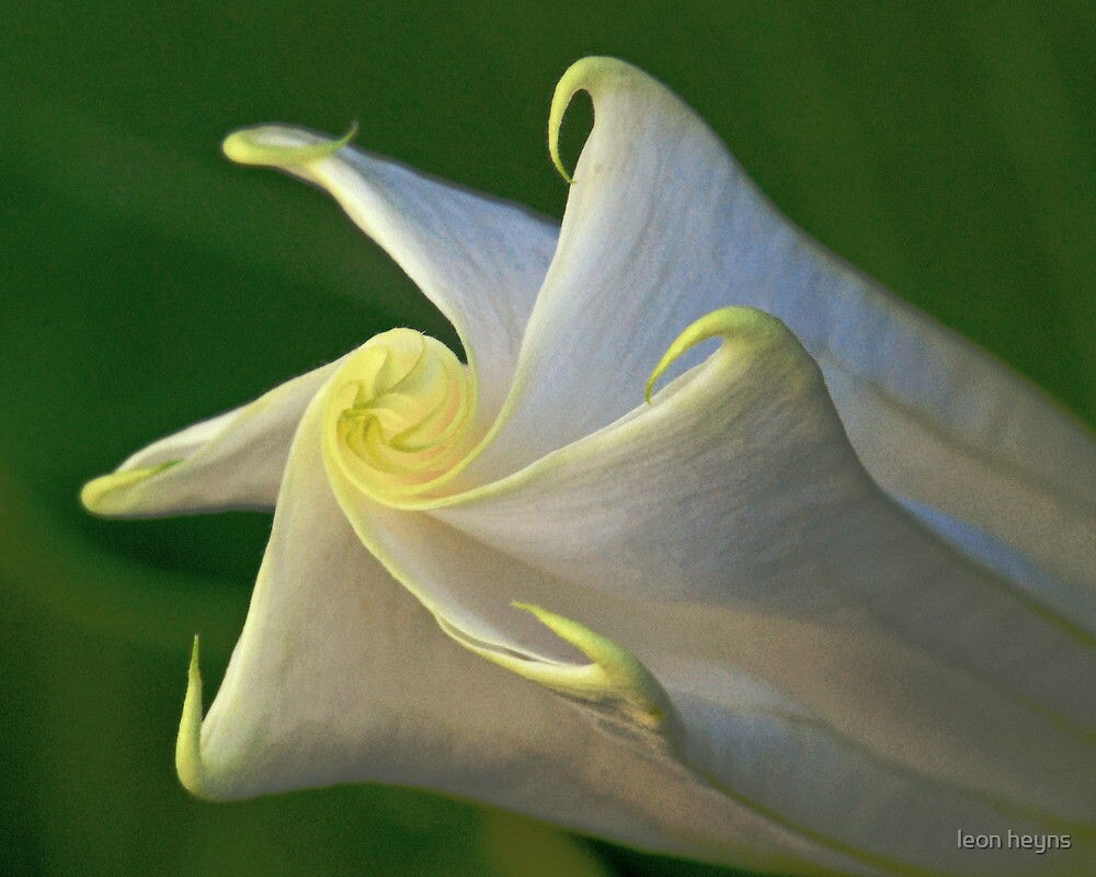 Unfolding Flower by Leon Heyns