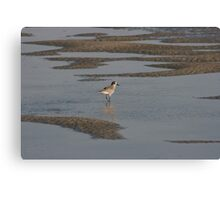 Sanderling on the sound Canvas Print