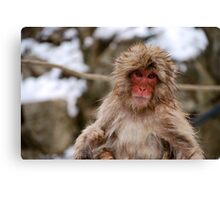 Snow monkey in Japan Canvas Print