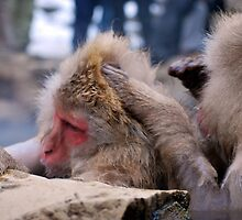 Snow monkeys in hot spring - Japan by mcreighton