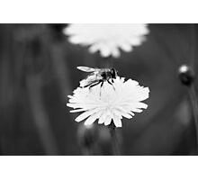 spring sweetness Photographic Print