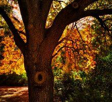Autumn Dreams by Saija  Lehtonen
