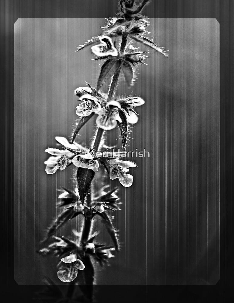 String Of Blooms Version 2 by Keri Harrish