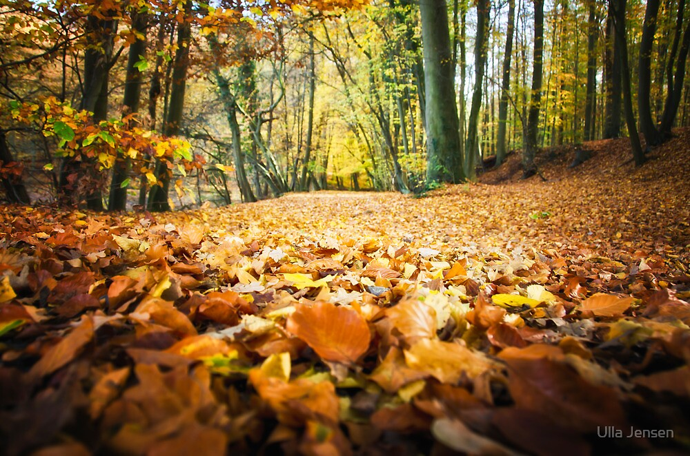 The fall carpet by Ulla Jensen