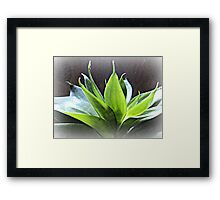 flaunting with humility... Framed Print