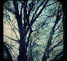 Sheoak by Melissa Drummond
