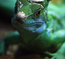 Leaping Lizards by kkimi88