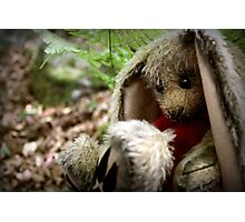 Bunny in the woods Photographic Print