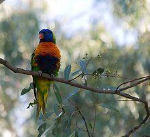 Parrot by Taswegian76