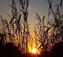 Richmond Hill Sunset by danbullock