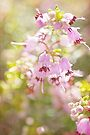 heather bells by Teresa Pople