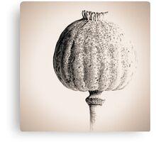 Poppy Head 05 Canvas Print
