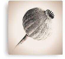 Poppy Head 06 Canvas Print