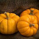 Munchkin Pumpkins by Ellesscee