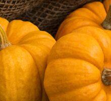 Munchkin Pumpkins Sticker