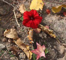 Fall Flowers... by Sybleann
