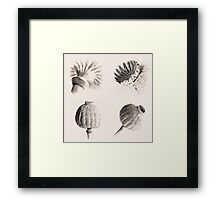 Poppy Heads Collection 5678 Framed Print