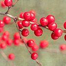 Dogwood Berries by Beth Mason
