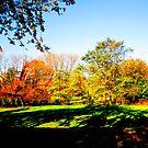 Autumn Shadows by Mistyarts