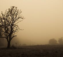 Lonely Tree on a Foggy Morning by Papandrea Photography