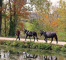 C and O Canal Mules by Eileen McVey