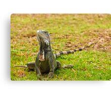 Iguana on Saint Marten Island Canvas Print