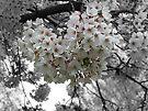 Flower tree by Jasna