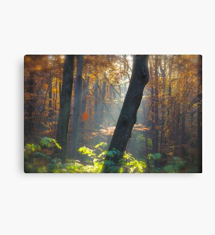 5 ★★★★★ . Autumn Miracle . November . by Brown Sugar . Favorites: 11 Views: 359 . thanks ! featured Canon Photography Only. Canvas Print