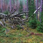 Fallen Tree by Martins Blumbergs
