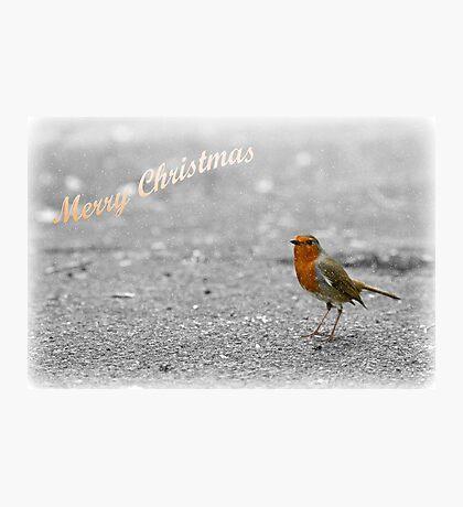 Robin Christmas card Photographic Print