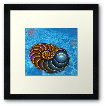 Ammonite by 4Flexiway
