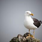 Posed Gull by Anne Gilbert