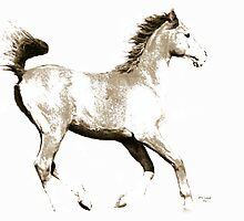 The Young Arabian Horse by Ginny Luttrell