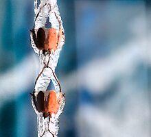 Icy Rain Chain by Kay Kempton Raade