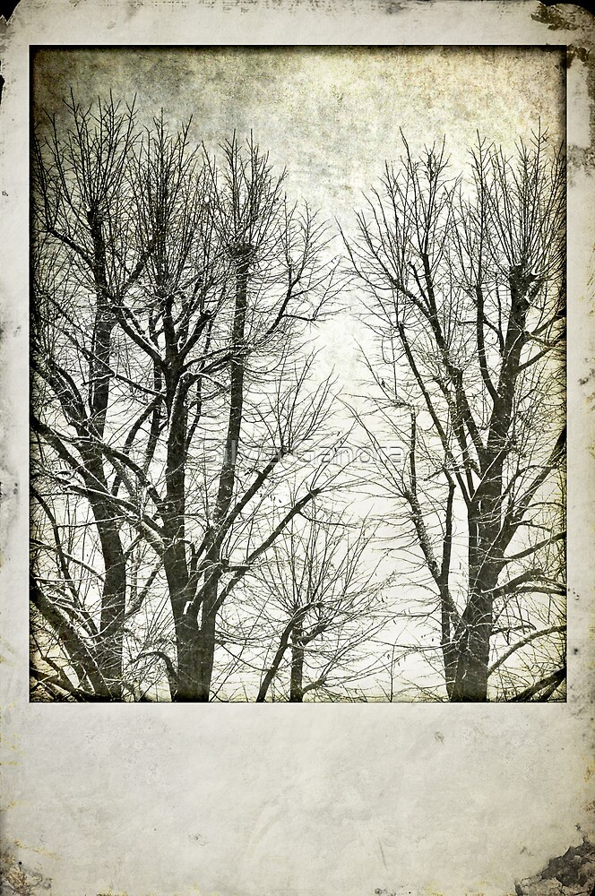 Winter trees by Silvia Ganora
