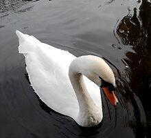 Swan by bertie01