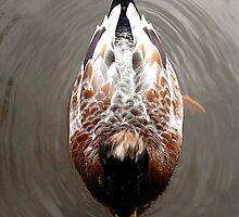 Duck on pond by bertie01