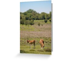New Forest ponies Greeting Card